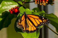 Butterfly Varieties at Botanical Gardens Stock Image