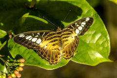 Butterfly Varieties at Botanical Gardens Royalty Free Stock Image