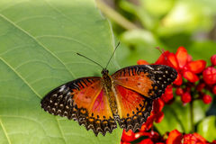 Butterfly Varieties at Botanical Gardens Stock Photo