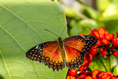 Butterfly Varieties at Botanical Gardens Royalty Free Stock Photos