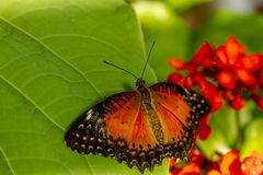 Butterfly Varieties at Botanical Gardens Royalty Free Stock Images