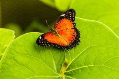 Butterfly Varieties at Botanical Gardens Royalty Free Stock Photography