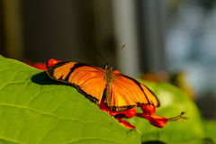 Butterfly Varieties at Botanical Gardens Stock Photos