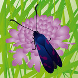 Butterfly (vector) Stock Images