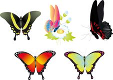 Butterfly. Vector collection Stock Photography