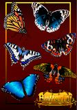 The Butterfly. (Vector) Royalty Free Stock Photos