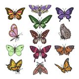 Butterfly vector colorful insect flying for decoration and beautiful butterflies wings fly illustration natural decor stock illustration