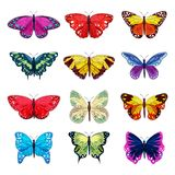 Butterfly vector colorful insect flying for decoration and beautiful butterflies wings fly in spring illustration stock illustration