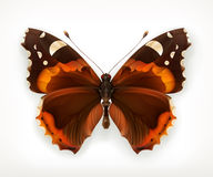 Butterfly, vector icon Stock Images