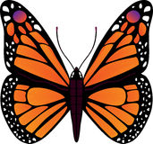 Butterfly vector illustration. Vector butterfly Stock Images