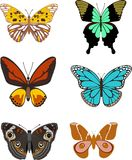 BUTTERFLY. The BUTTERFLY  is vector illustration Royalty Free Stock Photos