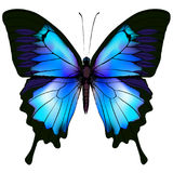 Butterfly vector illustration Stock Image