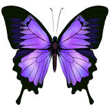 Butterfly. Vector illustration of beautiful pink and purple color Royalty Free Stock Photography