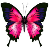 Butterfly. Vector illustration of red butterfly isolated on white background. Stock Images