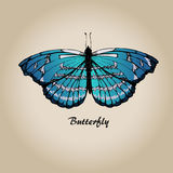 Butterfly 6 Royalty Free Stock Image