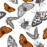 Butterfly vector pattern for design Royalty Free Stock Photography