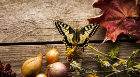 Butterfly on Vegetables on vintage wood background. flat lay com. Butterfly on Vegetables on vintage wood background. Butterfly. flat lay composition, Autumn Stock Photos