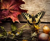 Butterfly on Vegetables on vintage wood background. flat lay com. Butterfly on Vegetables on vintage wood background. Butterfly. flat lay composition, Autumn royalty free stock images