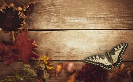 Butterfly on Vegetables on vintage wood background. flat lay composition, Autumn fall