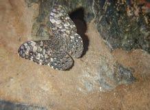 Butterfly on vertical rock. Mariposa camuflada entre piedras. Trpical butterfly. Close to Iguazu Falls. Misiones. Argentina. Parque nacional de las cataratas del stock photos