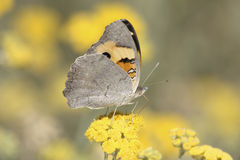 Butterfly view from the side Royalty Free Stock Photography