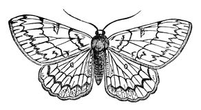 Butterfly vintage illustration Royalty Free Stock Photography
