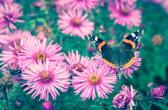 Butterfly and violet flower Royalty Free Stock Images