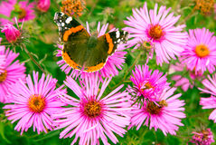 Butterfly and violet flower Royalty Free Stock Photography