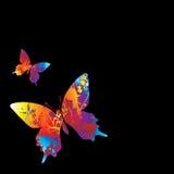 Butterfly visable Stock Photos