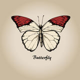 Butterfly 8 Stock Images