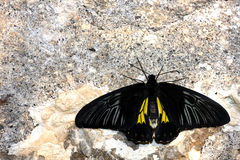 Butterfly on the wall Royalty Free Stock Images