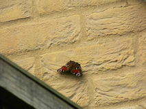 Butterfly on wall Stock Photo