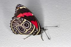 Butterfly on the wall. Photo of Butterfly on the walln royalty free stock photography