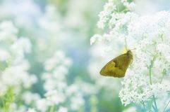 Butterfly wallpaper royalty free stock photo