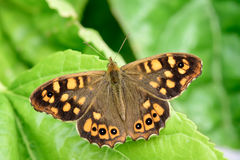 Butterfly watching from above in the river I Royalty Free Stock Images