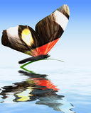 Butterfly on water Royalty Free Stock Photo