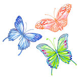 Butterfly. Watercolor isolated object. Royalty Free Stock Photo