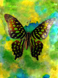Butterfly Watercolor Photo. Green butterfly, photo, with watercolors added Royalty Free Stock Images