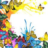 Butterfly and watercolor splash background Royalty Free Stock Image