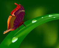 Butterfly and waterdrop Stock Photos