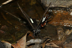 The butterfly at waterfall Stock Photos