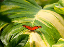 Butterfly on wet leaf Royalty Free Stock Image