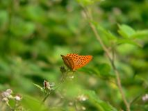 Butterfly whit orange wings in tge grass Stock Images