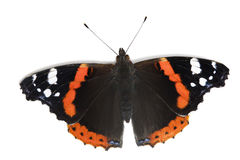 Butterfly on white Royalty Free Stock Photography