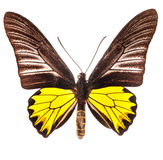 Butterfly on white Royalty Free Stock Photo