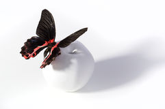 Butterfly on the white apple. Stock Image