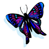 Butterfly on white background Stock Image