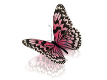 Butterfly.  on white background. Stock Photos