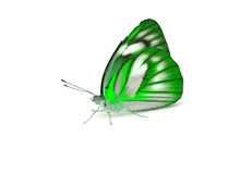 Butterfly. On White background Royalty Free Stock Images