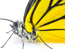 Butterfly. On a white background Stock Photos